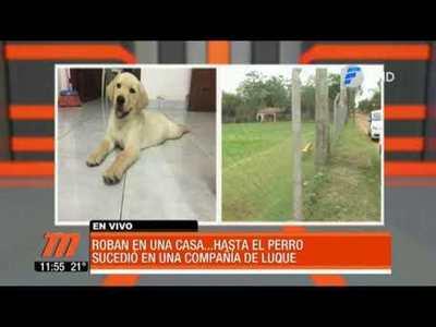 Delincuentes robaron hasta la mascota