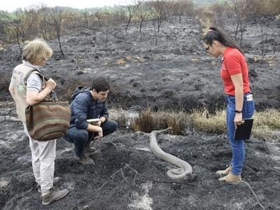 Unas 38 hectáreas con vida silvestre se perdieron en el Parque Guasú