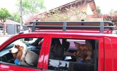 HOY / Capuchinos bendicen a las mascotas por día del animal