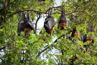 Caso de rabia por mordedura de murciélago enciende alarma