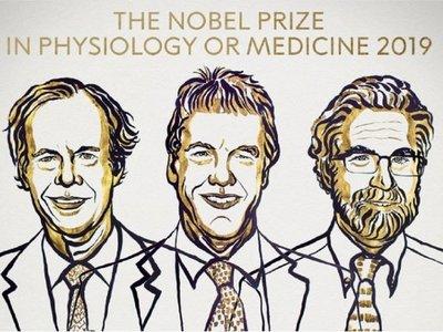 Nobel para descubridores de cómo las células usan el oxígeno