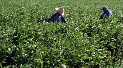 Gobierno entrega más de G. 1.700 millones en aportes y créditos para productores de Amambay