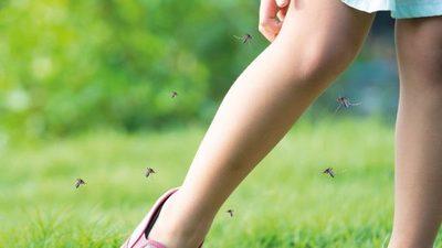 Con el calor reaparece el dengue
