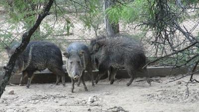 Personas que atenten contra la vida silvestre se exponen a fuertes sanciones