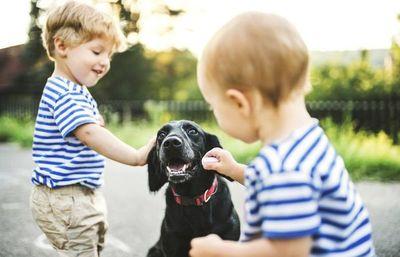 Cómo sacar el miedo de niños a animales