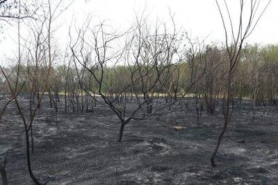 Fueron conformados grupos de trabajo para restauración del Parque Guasu