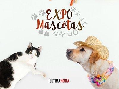 Todo listo para la Expo Mascotas de Última Hora