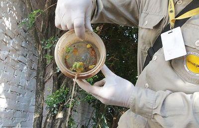 Dengue; alentador panorama en Misiones
