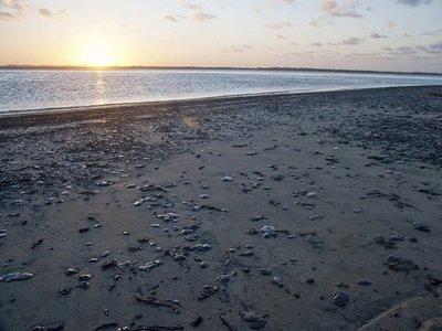 El petróleo mancha las paradisiacas playas de Brasil