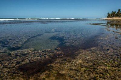 En Brasil, derrame de petróleo llega a las playas y afecta arrecifes de coral