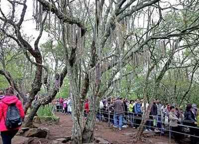La Virgen del Cerro congregó a miles de fieles el fin de semana