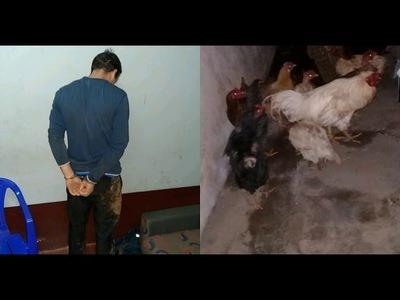 INSÓLITO: JOVEN QUEDÓ DETENIDO TRAS HURTAR 13 GALLINAS