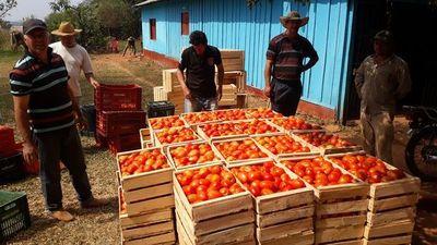 Tomateros de Caaguazú piden audiencia con Abdo para solucionar crisis en el campo