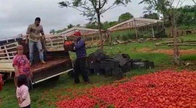 Productores tiran tomates a causa del contrabando