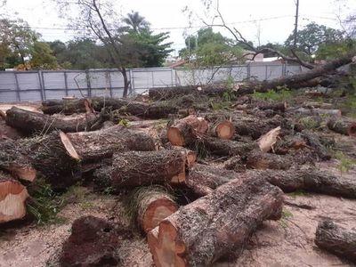 MOPC levantó censo de árboles del trabajo en el Botánico