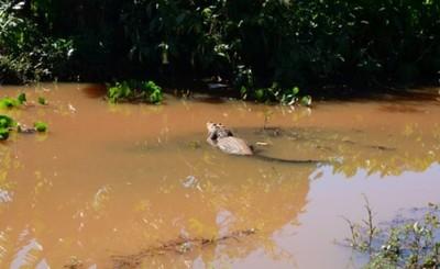 Buscan mecanismos de protección de vida silvestre del lago