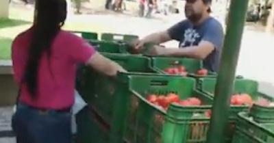 Hoy sigue la feria de los tomateros con precios purete