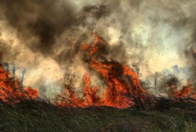 La desgarradora imagen que revela más incendios en el Chaco