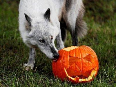 Las celebraciones de Halloween alrededor del mundo