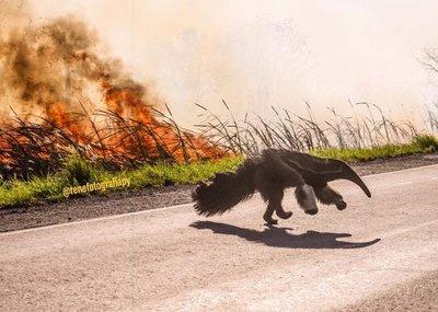 Las desgarradoras imágenes del Chaco quemándose que se volvieron viral