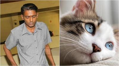 Mató a una gata embarazada colocándola en un secarropas
