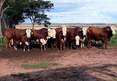 Buscan mejorar ingresos de pequeños productores