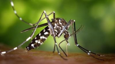 Diagnostican el segundo caso de transmisión sexual de dengue en el mundo