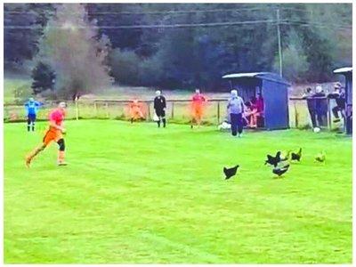 Expulsado por matar a una gallina en Croacia