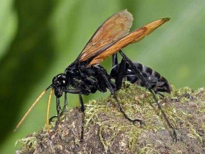 ¿Qué hacer ante las picaduras de insectos?