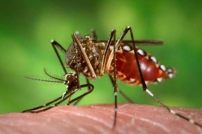 España: Confirman contagio de dengue por vía sexual