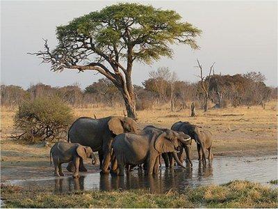 Al menos 200 elefantes mueren de hambre en parque de Zimbabue