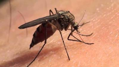 Dengue se puede transmitir por vía sexual