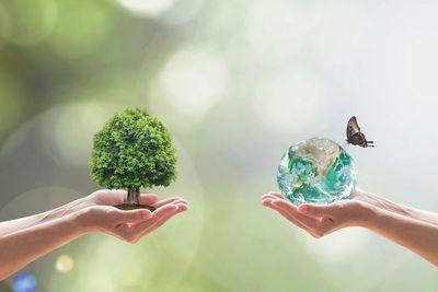 Fondo Verde aprobó la continuidad del proyecto REDD+