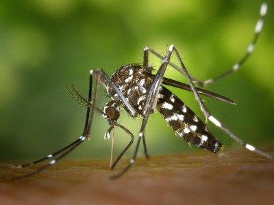 Dengue navideño:  Diciembre registrará eclosión epidémica