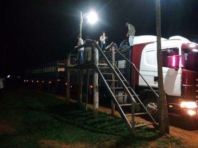 Incautan 31 vacunos y demoran a conductor en Caapucú