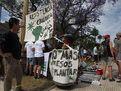 Centenares de personas piden ley que legalice marihuana en Argentina