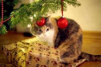 No deje solo al gato con cintas de regalo