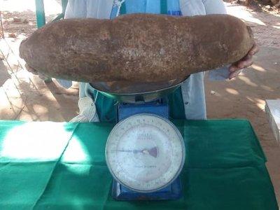 Productora sorprende en feria con mandiocas de casi 8 kilos