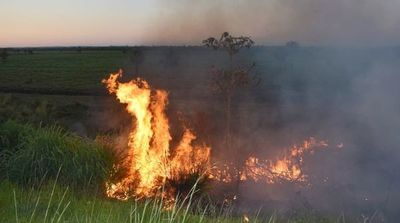 Se quemó vegetación a orillas de Ecovía