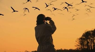 HOY / Paraguay será sede de turismo mundial de observación de aves en el 2022