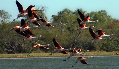 Paraguay será sede de mundial de observación de aves en el 2022