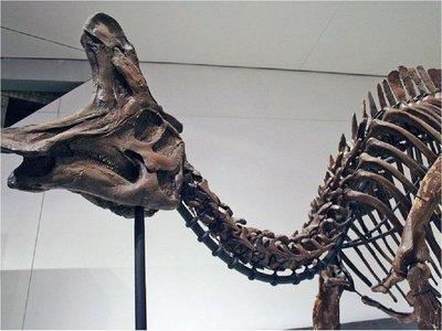 Hallan en el Pirineo los restos de lambeosaurino más antiguos de Europa