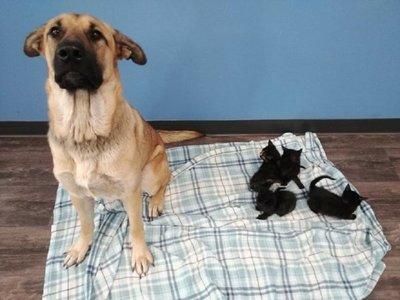 Serenity, el perro callejero que acogió a gatos, se vuelve viral