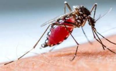 Dengue: informan sobre dos casos confirmados