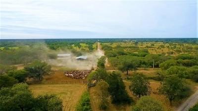 Chaco: Fiscal imputó y pidió prisión para empresario por deforestar reserva