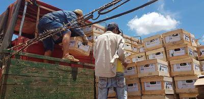 Agroexportadores adquieren piñas del distrito de Horqueta