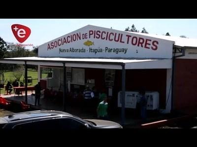 LÍNEA TRIFÁSICA LLEGA A PISCICULTORES DE NVA, ALBORADA