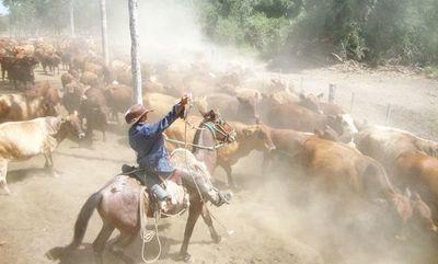 Repunte del precio del ganado crea expectativas para un buen año 2020