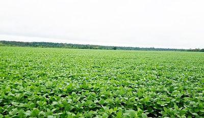 Las lluvias registradas traen esperanza a los agricultores