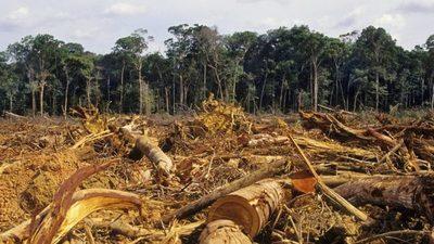Imputan y piden prisión para empresario por deforestación